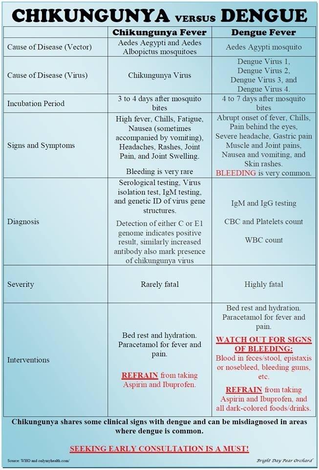 dengue virus research paper